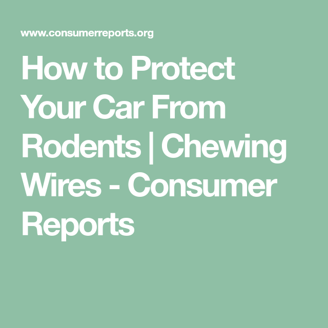 How to Protect Your Car From Rodents | Consumer reports