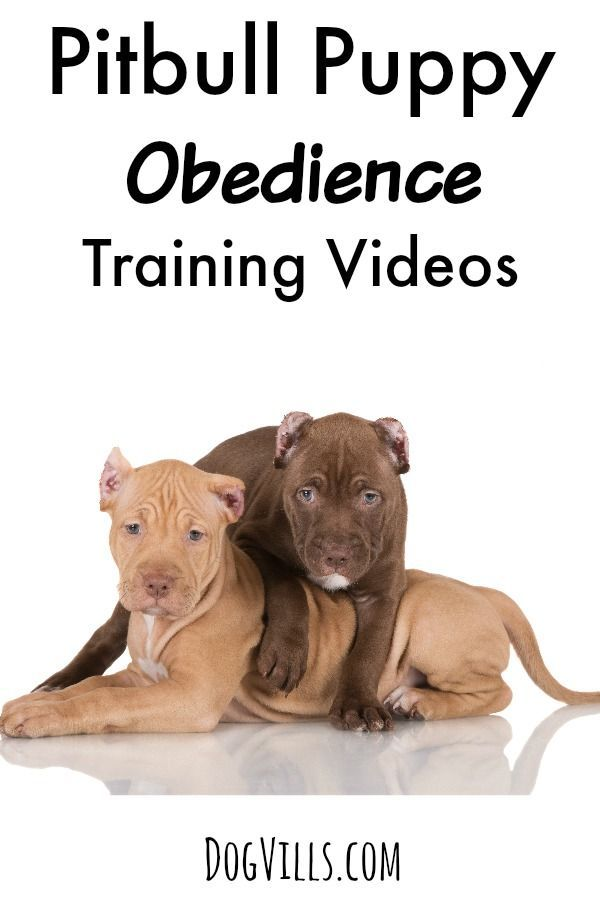 dog obedience training videos