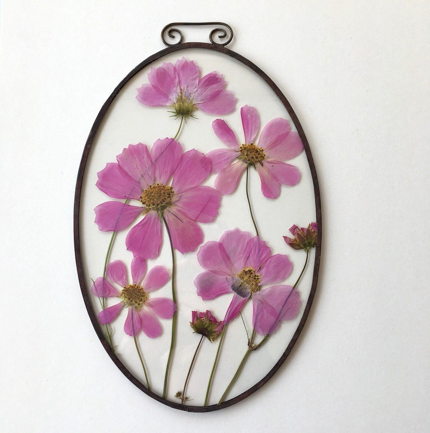 Rustic floral frame;Remarkable pressed Cosmos in oval