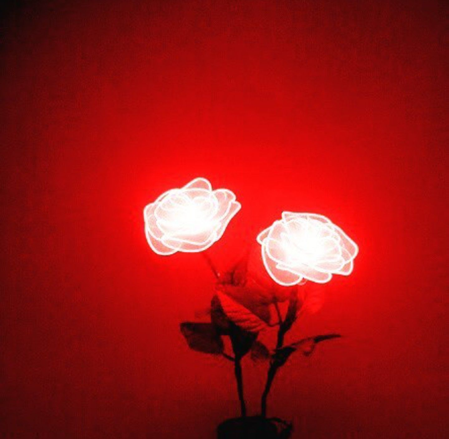 neon light roses Red aesthetic, Pink aesthetic