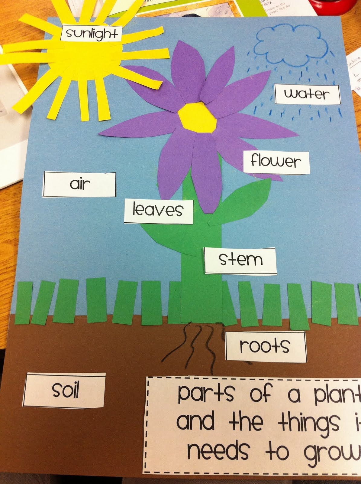 After Weather We Dove Right Into Plants In First Grade