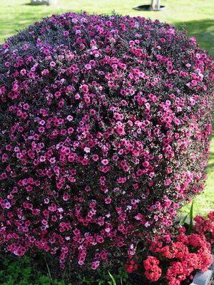 декоративные растения фото и названия для сада