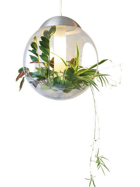 h ngende g rten f r die wohnung kein problem zimmerpflanzen garten wohnideen pinterest. Black Bedroom Furniture Sets. Home Design Ideas