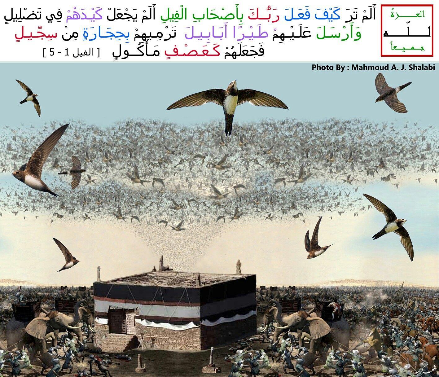 Holy Quran Surat Al Feil Elephant Please See Details On My Website Holy Quran Quran Elephant