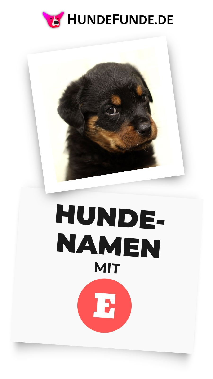 Hundenamen Mit E In 2020 Hundenamen Lustige Hundenamen Namen Fur Hunde