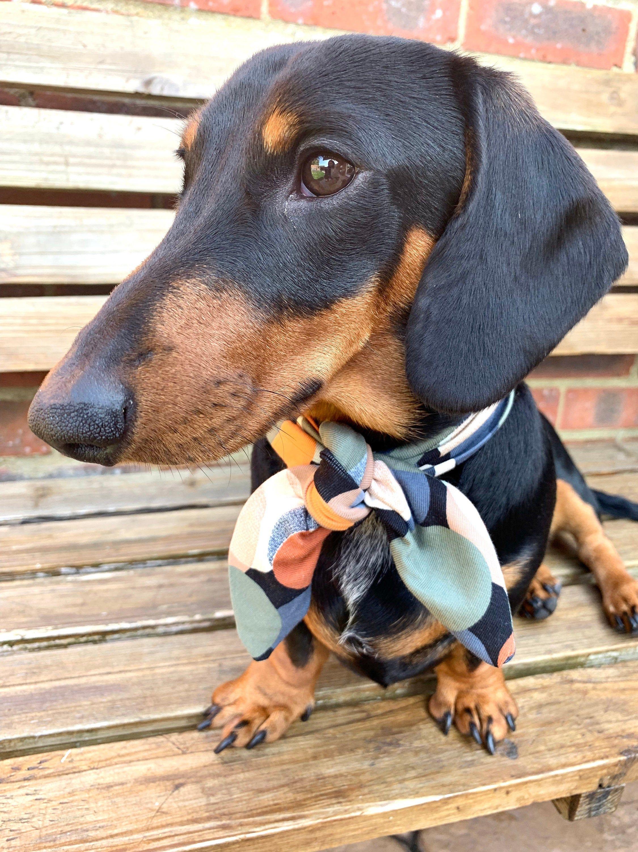 Retro Style Dog Bandana Tie Slip Over Collar Pet Neckwear