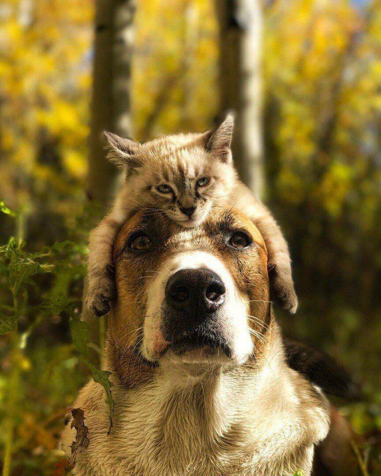 Извѣстія | Собаки, Кошки и котята, Котопес