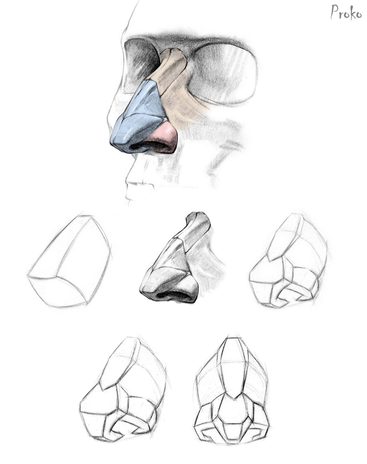 Proko >> How To Draw A Nose  Anatomy And Structure Https: