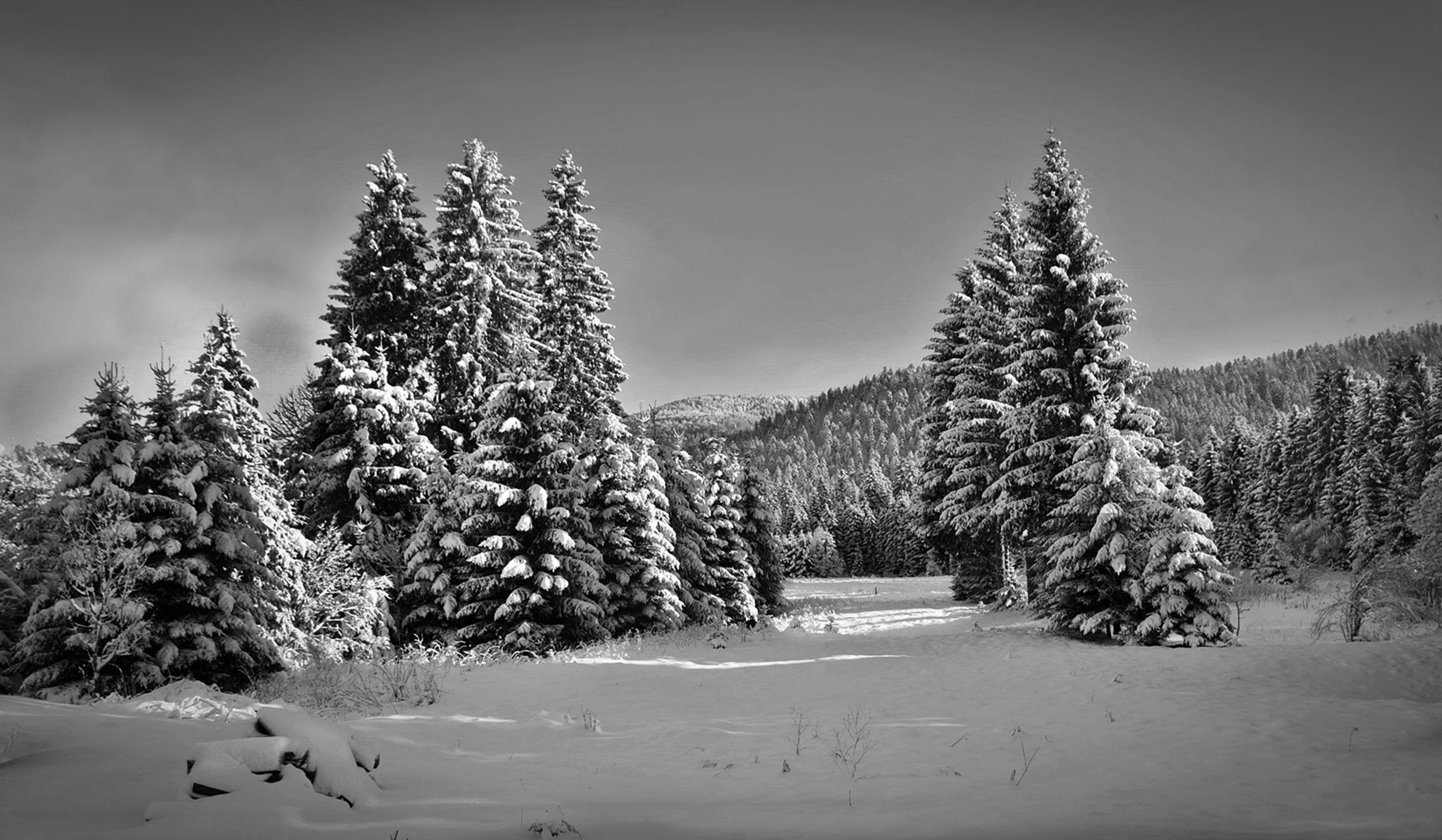 Photo by zoran konestabo landscapes in black and white pinterest