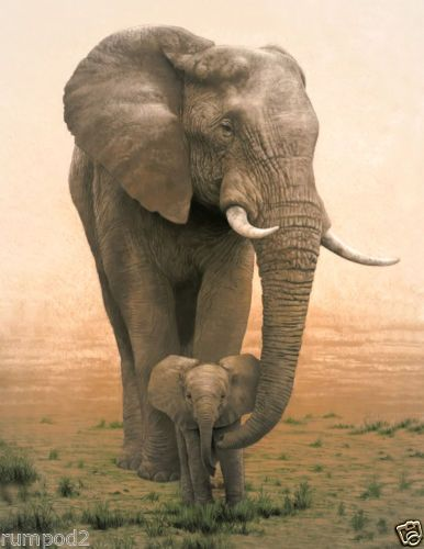 Animal Poster Mother Elephant Baby Illustration Africa Mother And Baby Elephants Animals Cute Animals Animals Wild