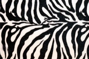 Tumblr Backgrounds Onlybackground Zebra Print Background Animal Print Wallpaper Zebra Print Wallpaper