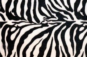 Tumblr Backgrounds Onlybackground Zebra Print Background Animal Print Wallpaper Zebra Print Wallpaper