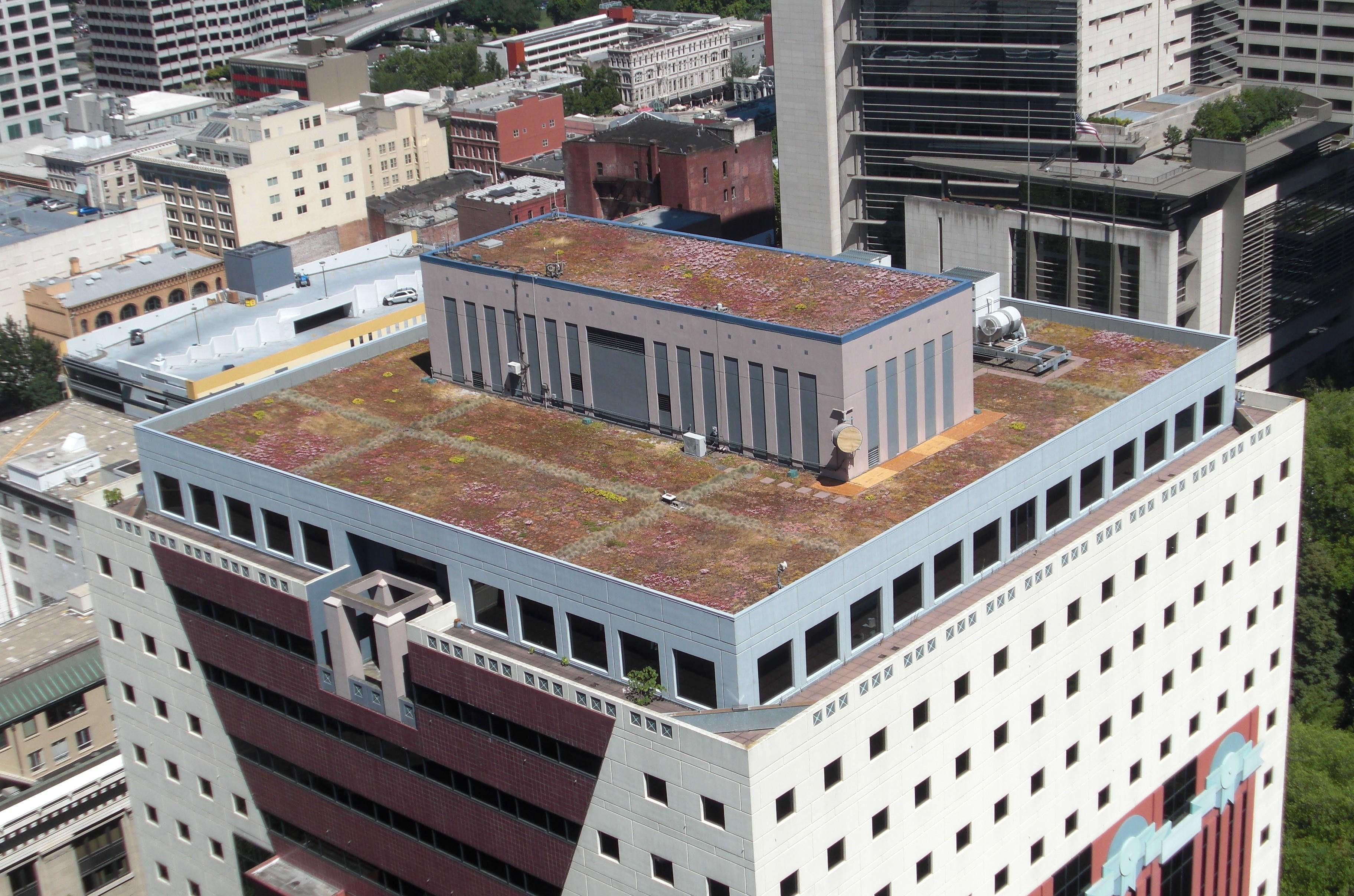 Portland Building Ecoroof City Of Portland Bureau Of Environmental Services Portland City Green Roof Stormwater
