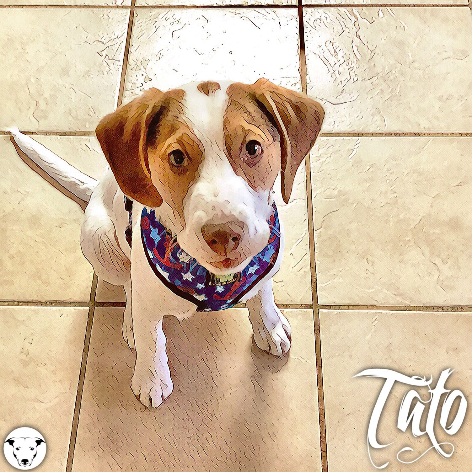 Welcome Tato To The From Dusk Till Dog Family He Is About A 4