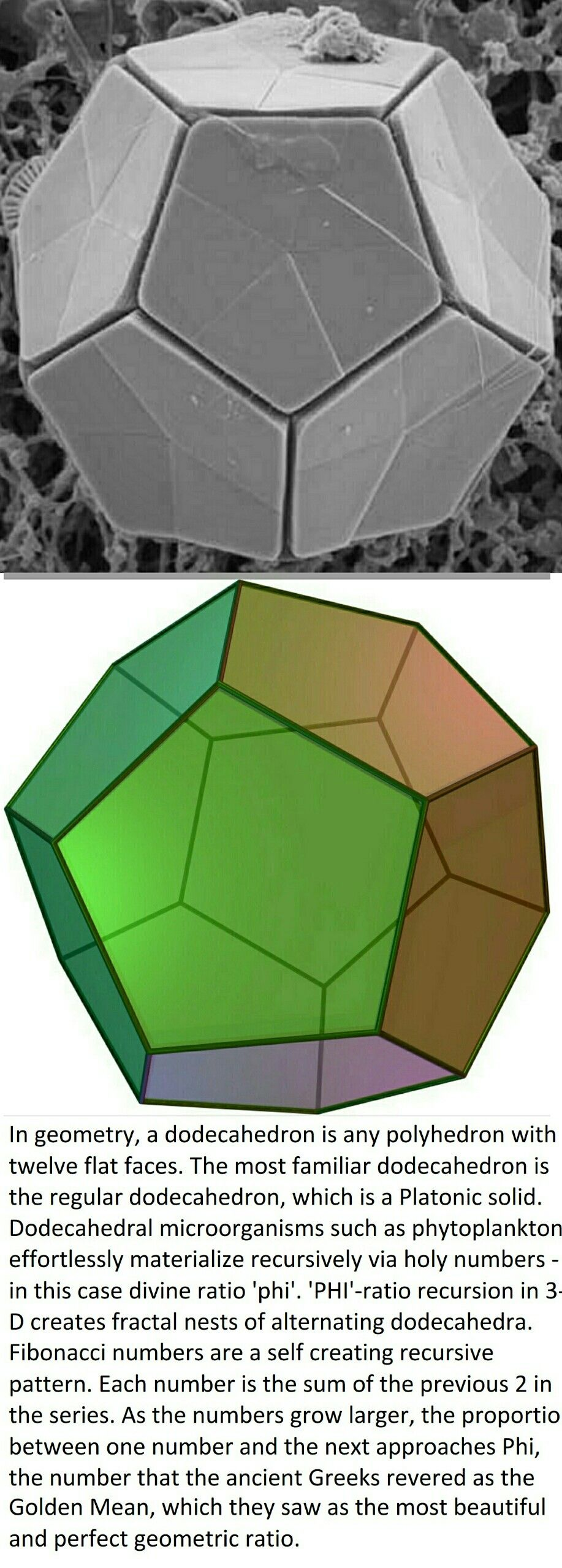 Dodecahedral Microorganisms Such As Phytoplankton Effortlessly Materialize Recursively Via The Ratio Phi Coccolith Microorganisms Plankton Calcium Carbonate [ 2559 x 917 Pixel ]