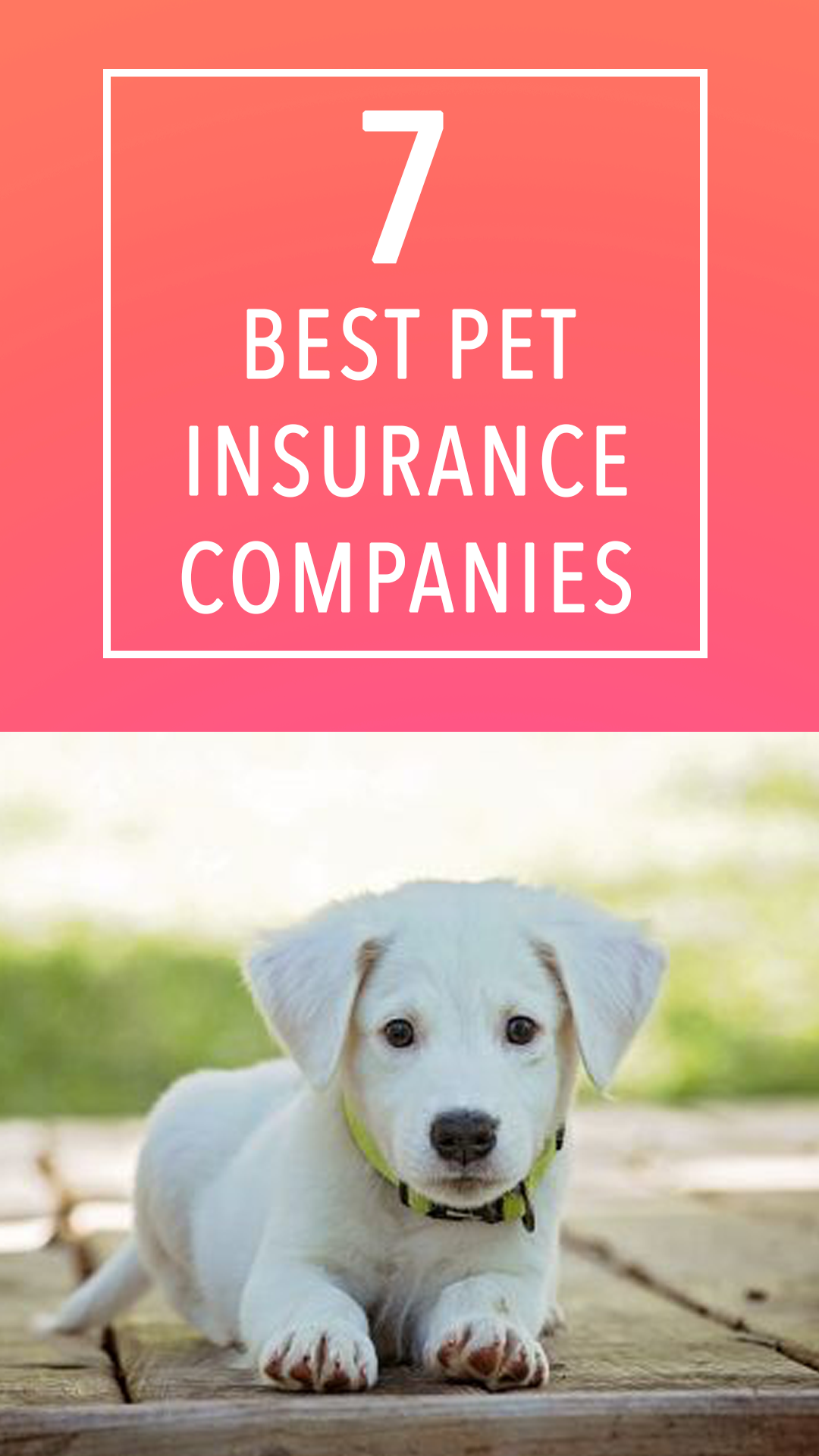 7 Of The Best Pet Insurance Companies According To Actual Pet