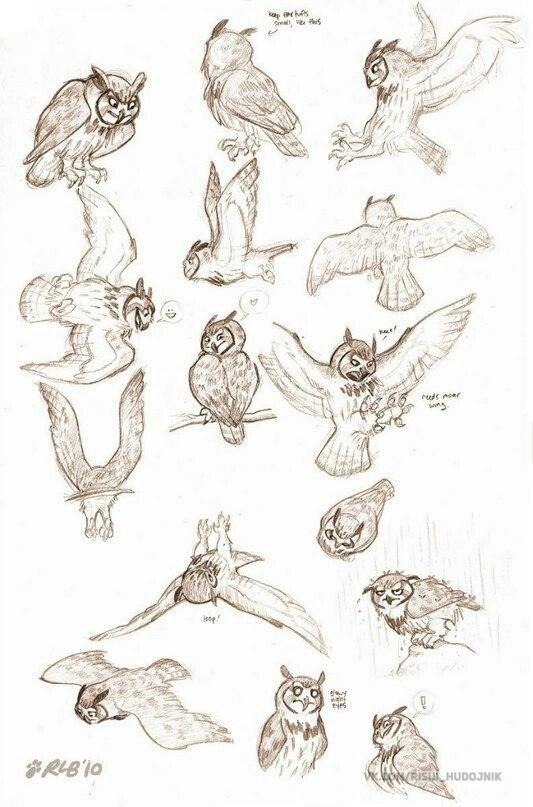 Pin de Мила Соседова en животные | Pinterest | Tutoriales de dibujo ...