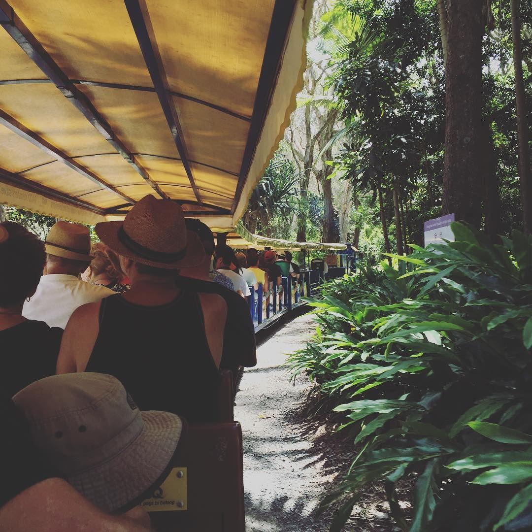 #australia #currumbinwildlifesanctuary #train #호주 #동물원 잼ㅋㅋㅋ by 2jamnee http://ift.tt/1X9mXhV