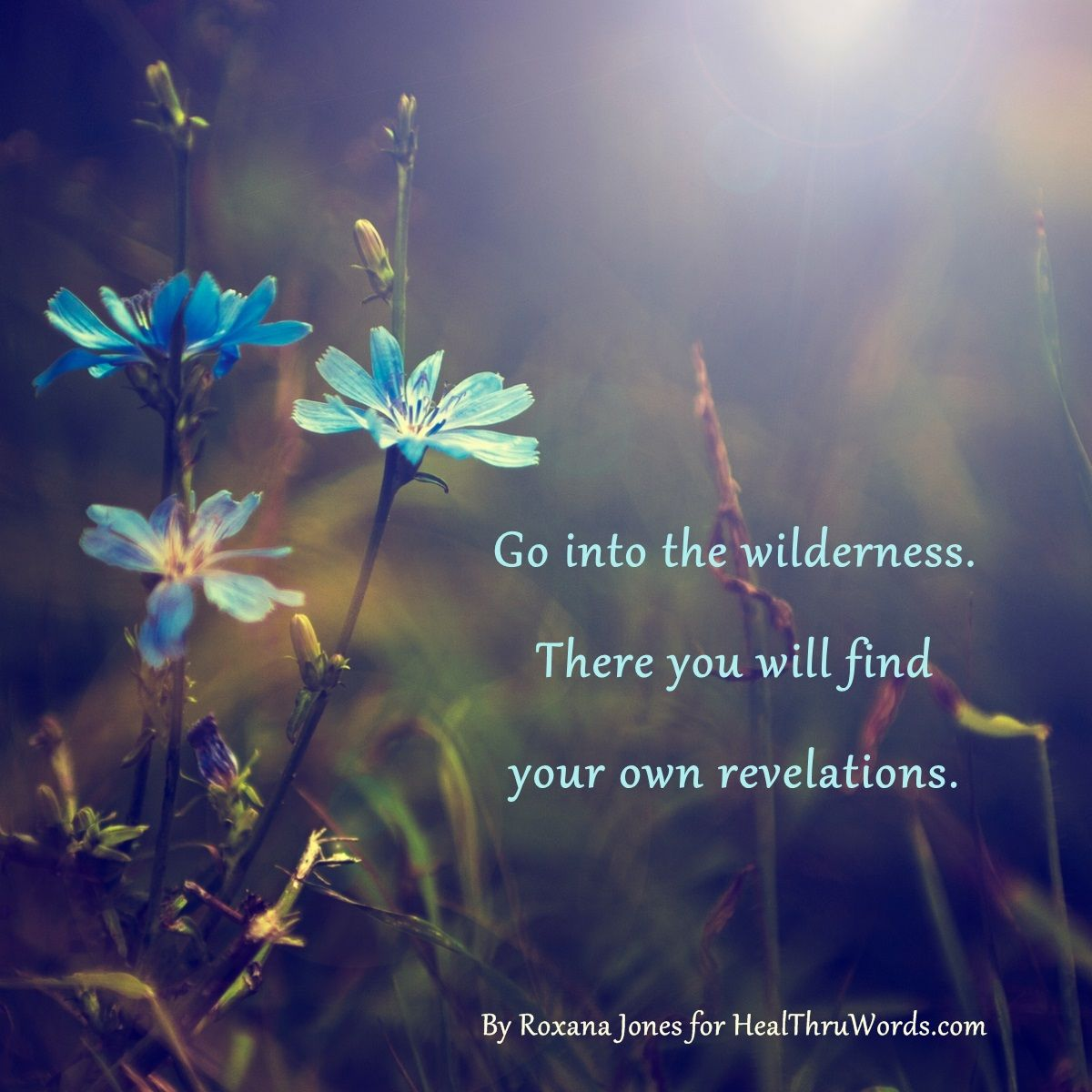 Quotes Nature Go Into The Wildernessthere You Will Find Your Own Revelations