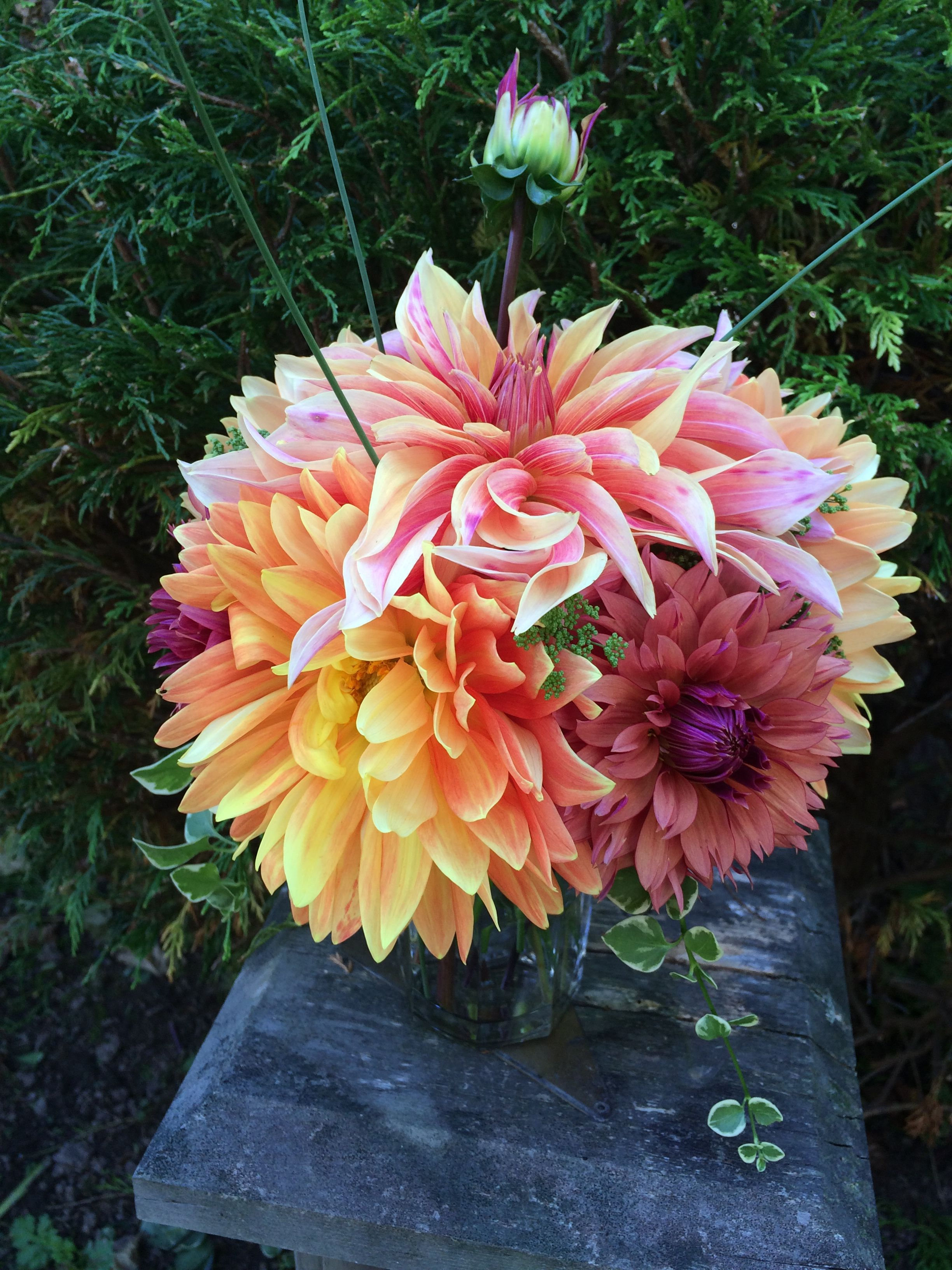 Pin by Kim Satteson on 2017 Kim's own Dahlias 2017 (With