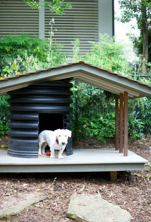 Am nager un coin ext rieur pour son chien chien heureux - Amenager son exterieur ...