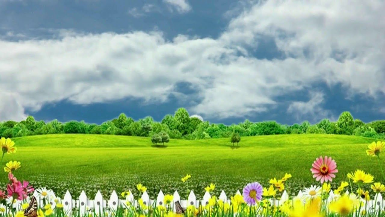 Nature Flower Background Video Free Footage Video Background Bsmotion In 2020 Nature Backgrounds Landscape Background Flower Backgrounds