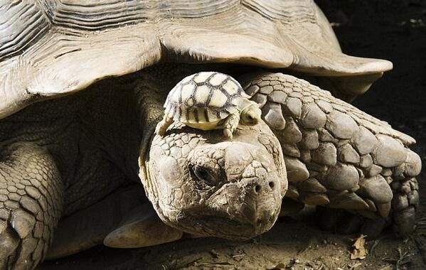 140 year old mom with a 5 day old son via @itsearthpics