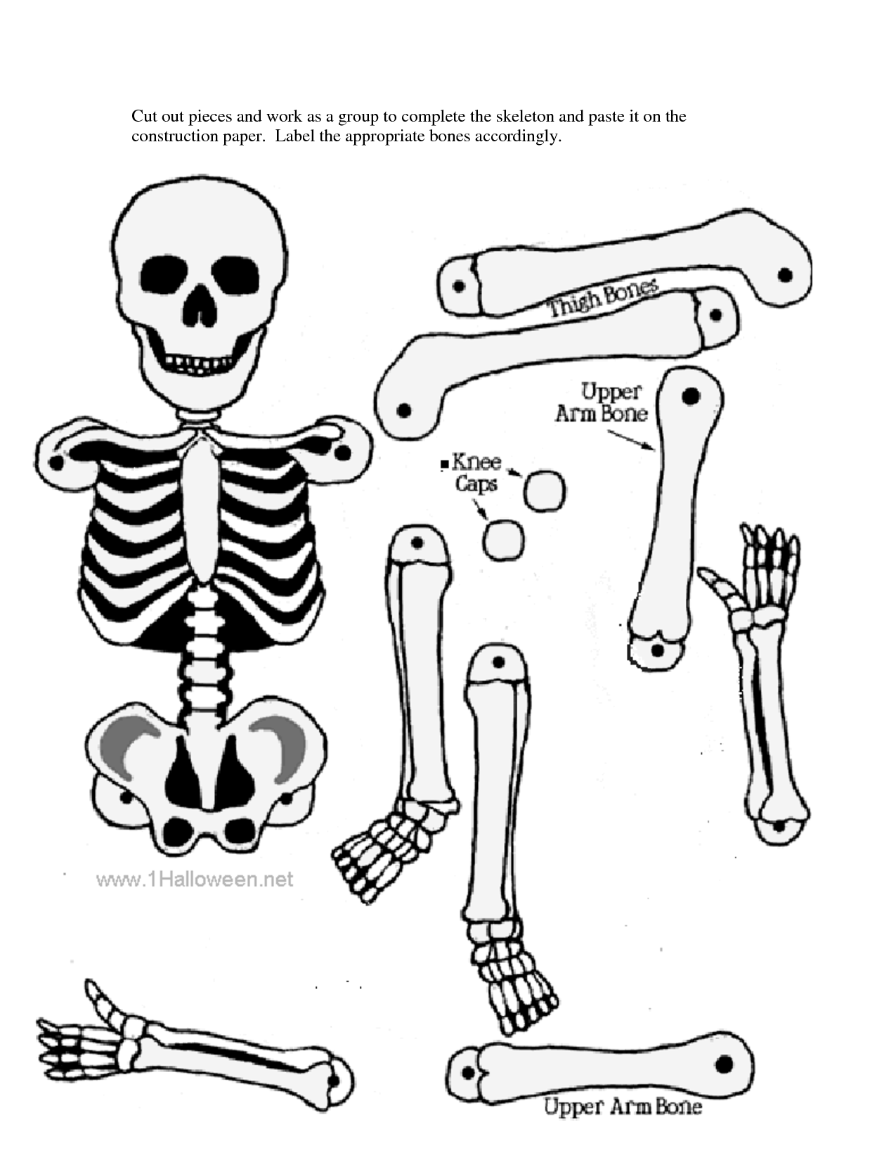 Skeletal System Without Label