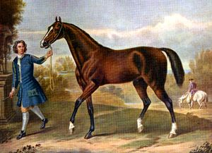 """Darley Arabian was one of the three founding """"arabian"""" horses for the thoroughbred breed. Only the Darley Arabian was actually an arabian. The other two were a turkmene and a barb."""