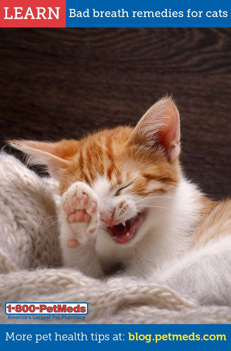 Pin On Pet Dental Health