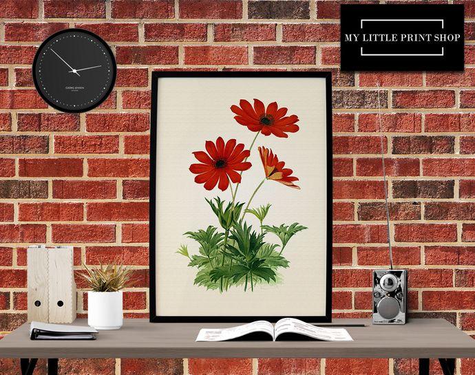Vintage Red Flower, Botanical Print, Gift for Her, Flower Print, Flower Wall