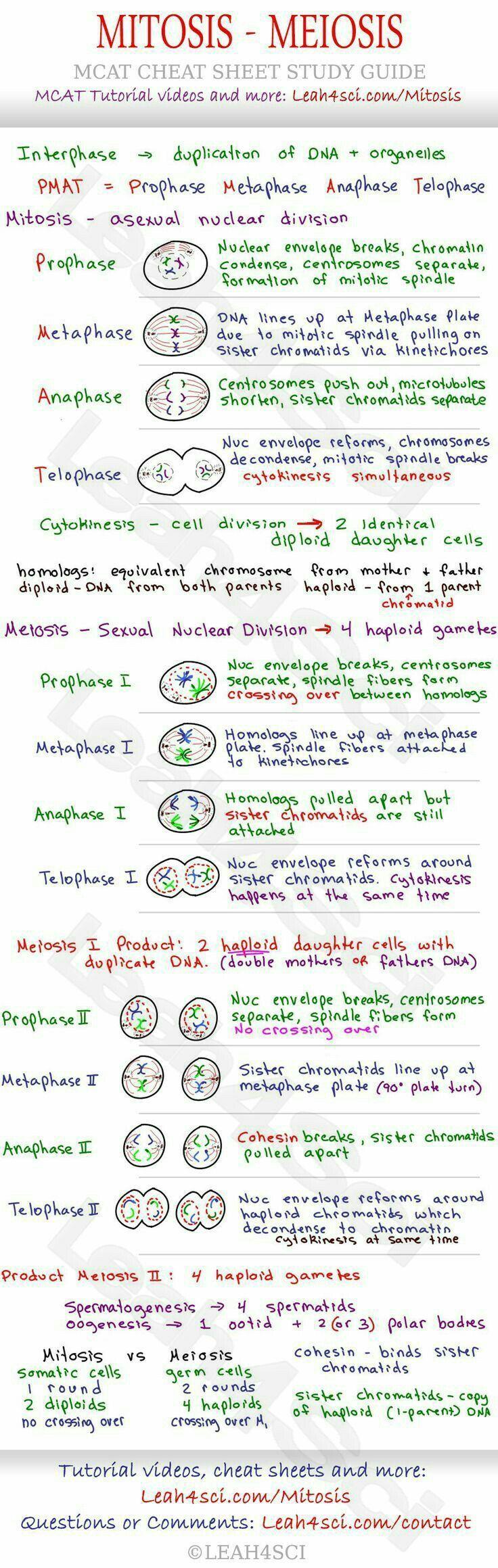 C5 Gcse Biology Mitosis Meiosis Teaching Biology Nursing Study Biology