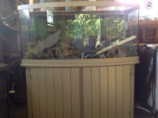 free$ 72 Gallon Bow Front Aquarium | Craigslist | Bow front