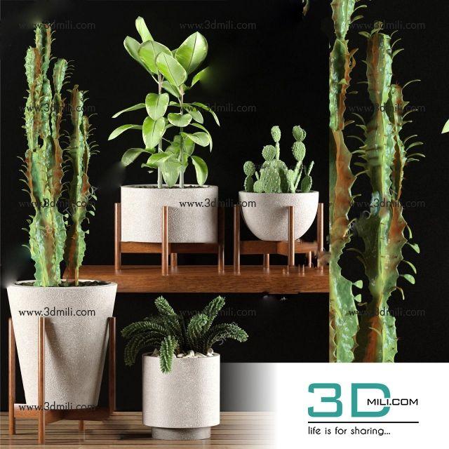 294  Plant 3dsmax Model Free Download - 3D Mili - Download 3D Model