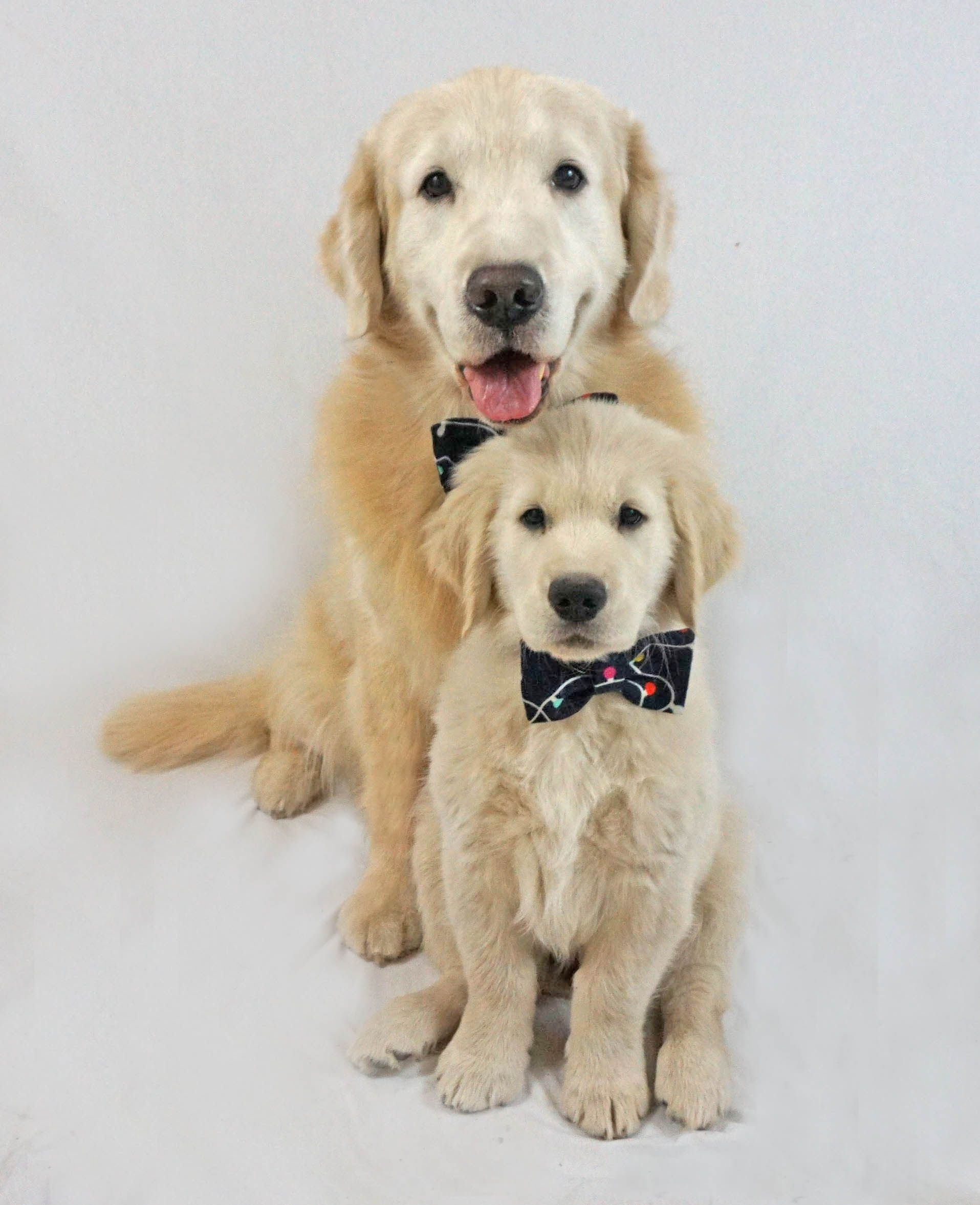 Jack And His Son Major Cute Cats And Dogs Golden Retriever