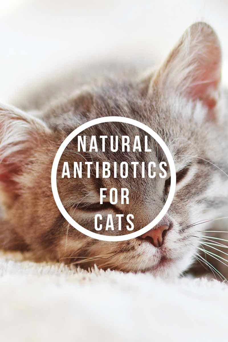 Natural Antibiotics For Cats Health And Care Advice For Your Cat Catfacts Natural Pet Care Sick Cat Cat Health Care