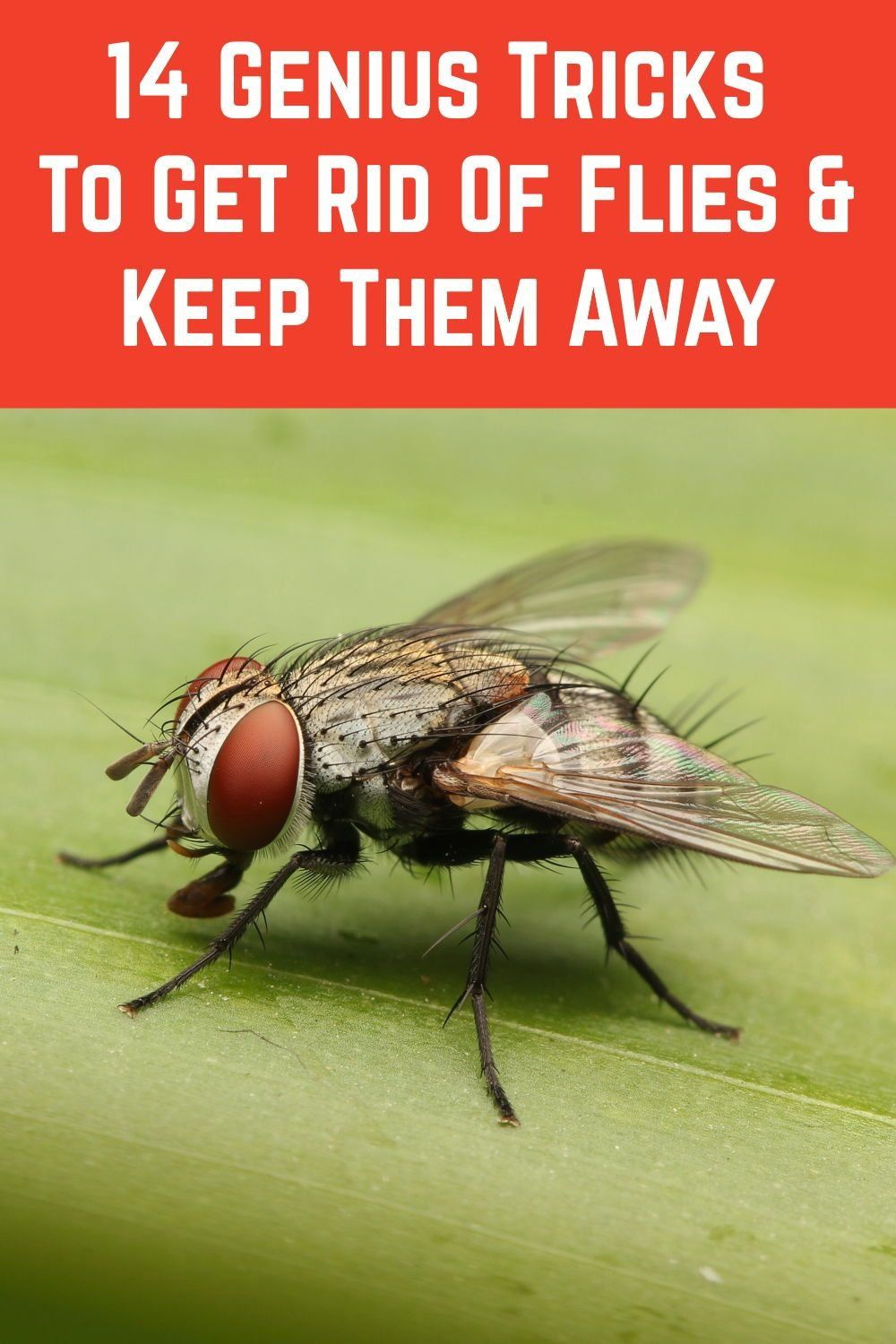 de43c78bdff4cfede92590c625acf6f8 - How To Get Rid Of Green Flies In The House