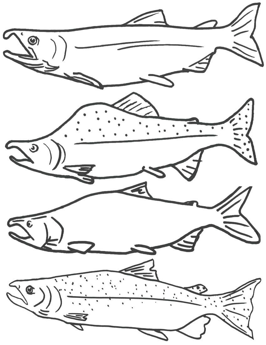Free Coloring Page of Salmon Fish, Free Printable Fish