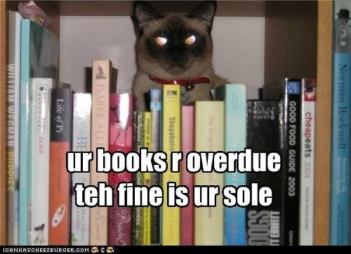 Ur Books R Overdueteh Cats Funny Cat Pictures Funny Cats