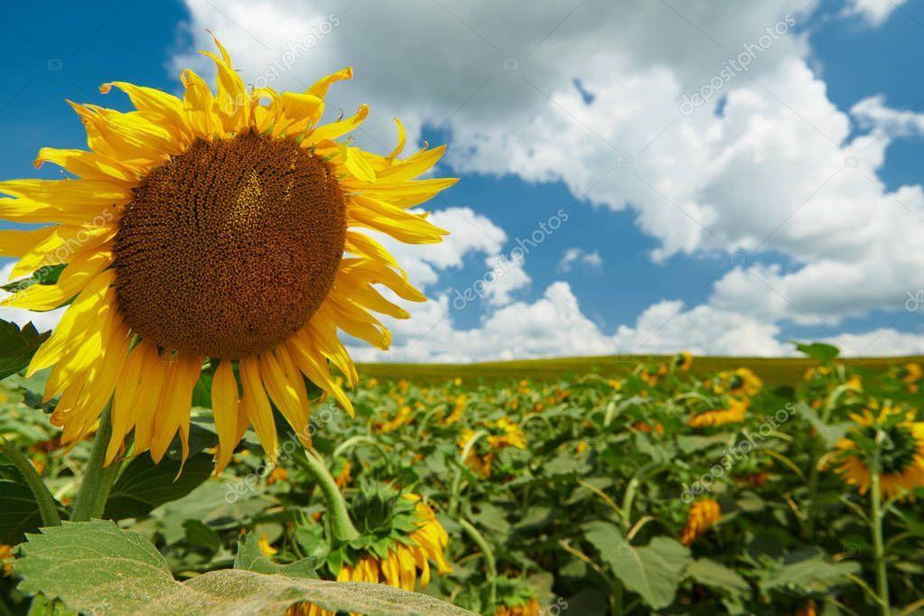 Nature Landscape Yellow Flowers And Blue Mountain Lake Hills Red Cloud Sunset Hd Desktop Wallpaper 3840 2400 4k Wallpaper 2020 Manzara Kir Cicekleri Guzel Yerler