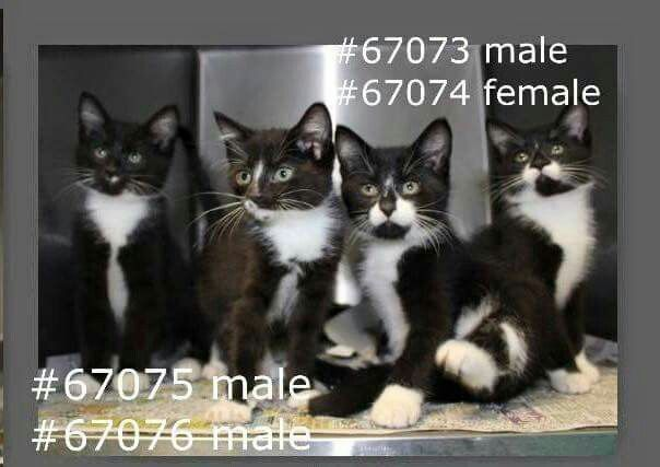Can You Save These Precious Kittens Who Will Be Killed At 4 Pm Tomorrow At Acc Shelter In Rowan County How Can They Kill Kittens Kittens Rowan County Animals