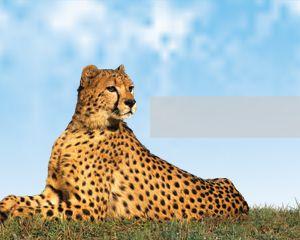 Leopard powerpoint template is a free design for powerpoint leopard powerpoint template is a free design for powerpoint presentations with a high quality leopard image toneelgroepblik Gallery