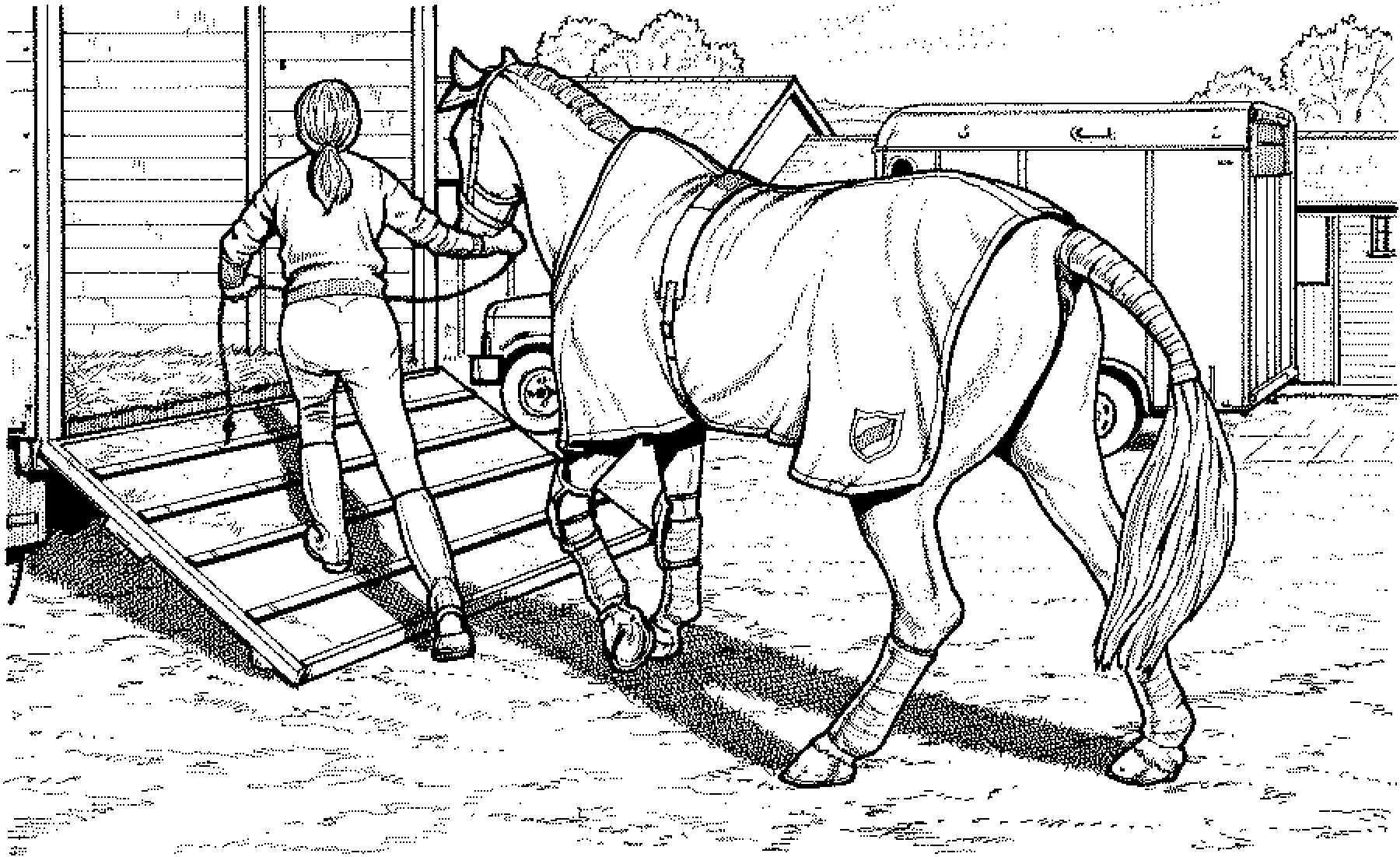 Trailer Loading A Horse Ausmalbilder Pinterest Ausmalbilder