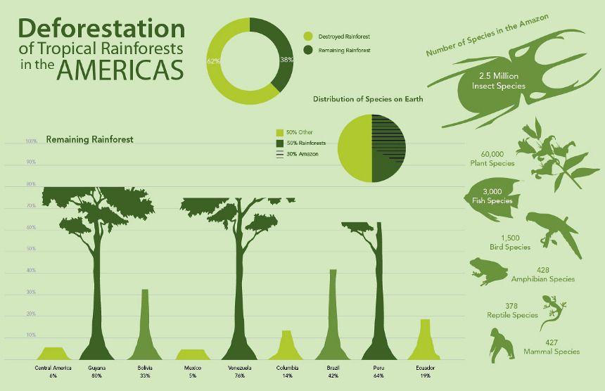 Deforestation Infographic Infographic Deforestation Rainforest