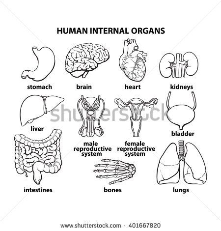 Set of human organs vector different human entrails black and set of human organs vector different human entrails black and white sketch art ccuart Gallery