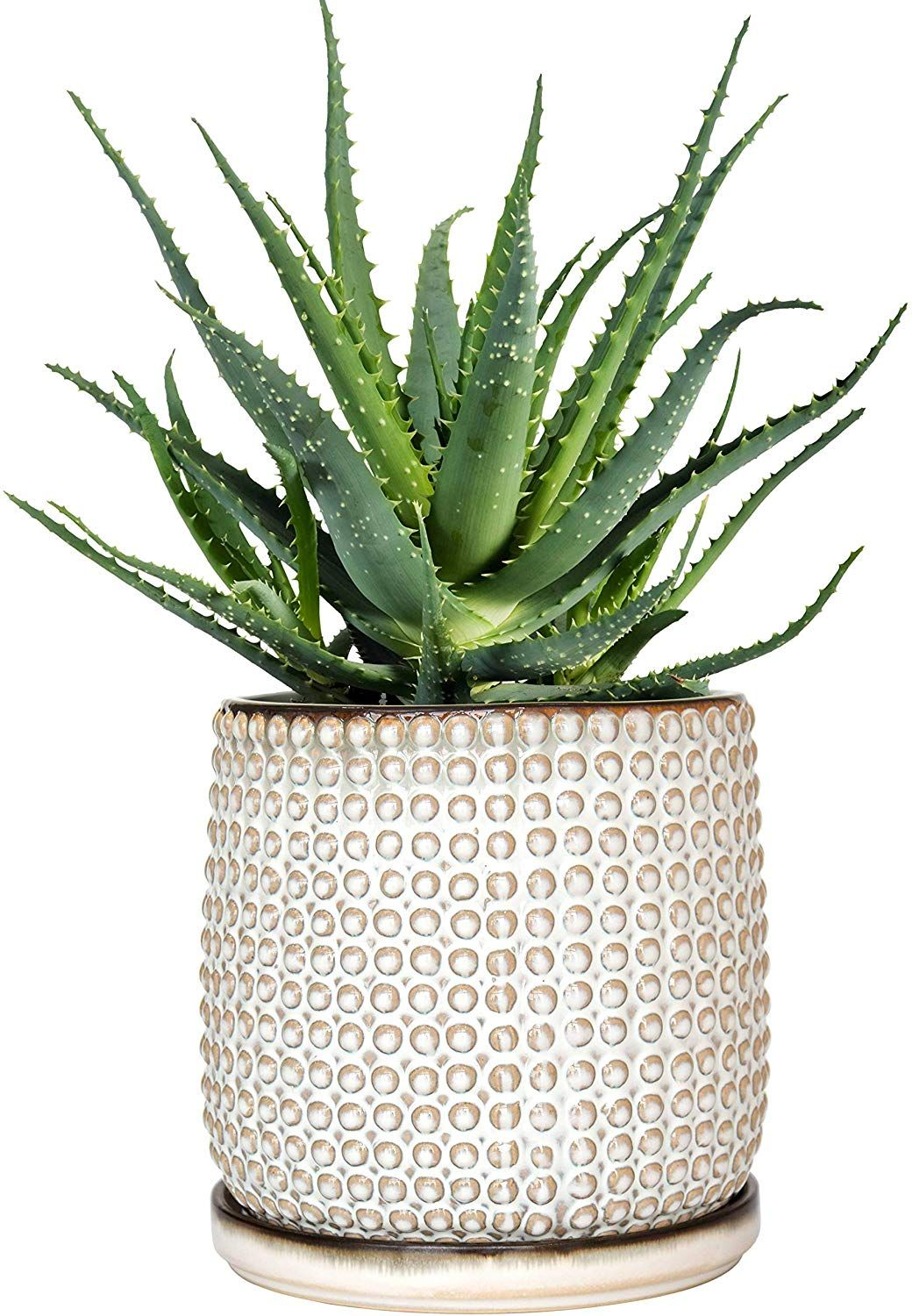 Amazon Com Beaded Stoneware Pot With Drainage Hole And Tray Smoke White Ceramic Plant Pot 6 Inch Round In 2020 Ceramic Plant Pots Ceramic Flower Pots Stoneware Pot