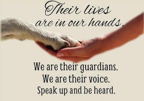 Their Lives Let's Help Pinterest Animals Dogs And Pets Extraordinary Animal Abuse Quotes