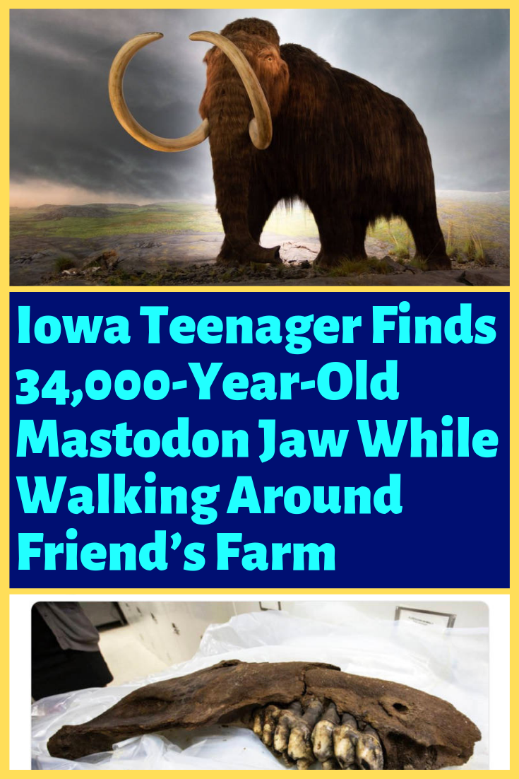 Iowa Teenager Finds 34,000-Year-Old Mastodon Jaw While
