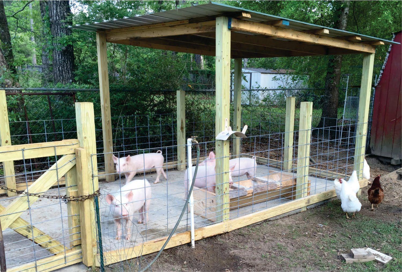 How To Build A Pig Pen Design Organic Hogs Youtube Porcos