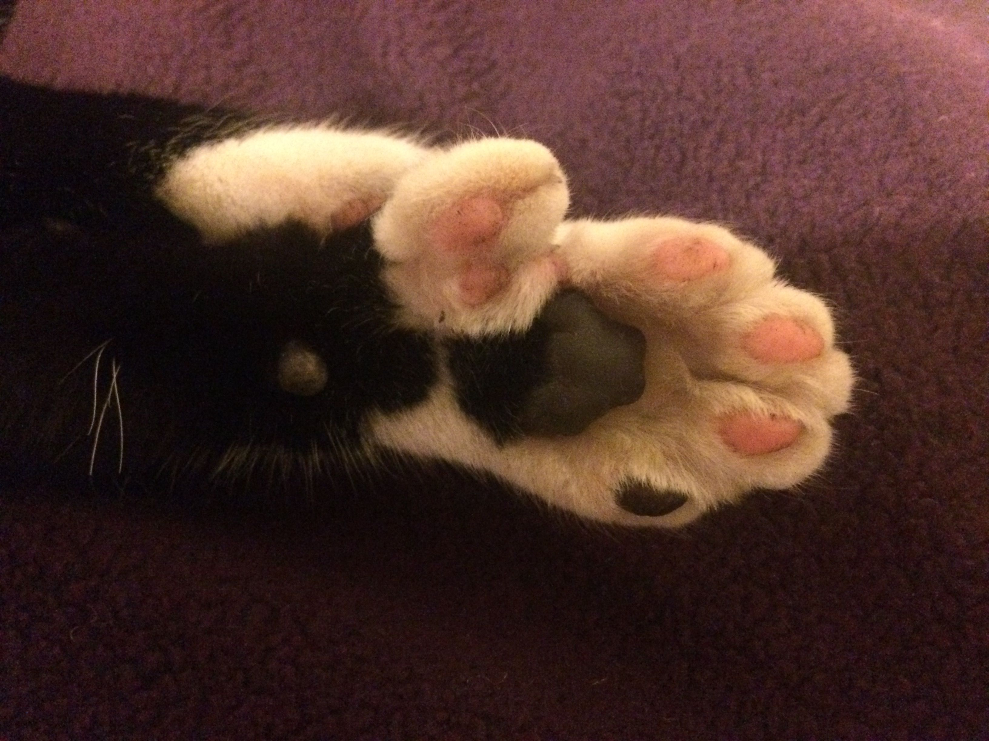 Polydactyl Paw Paw Cats Mittens